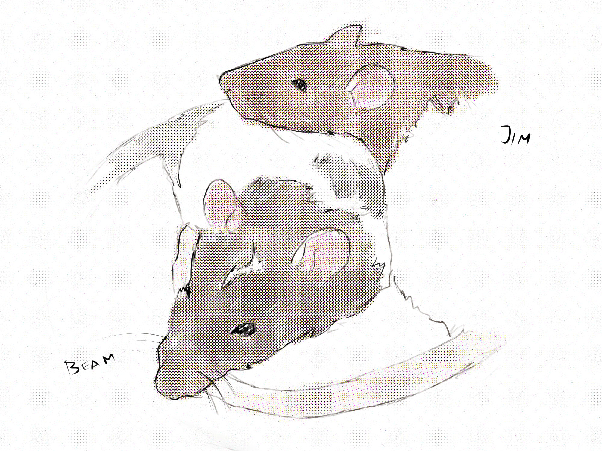 Drawing by Viktoriia Shcherbak of our two rats, Jim and Beam.